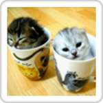 The Cute Kittens Slideshow!