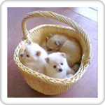 The Cute Puppies Slideshow!