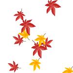 紅葉の落し物
