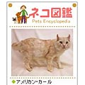 Cat Picture Encyclopedia