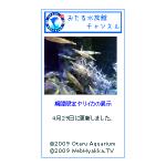 おたる水族館チャンネル